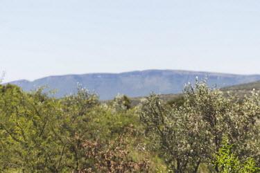 looking toward Magaliesberg on a hot summer day