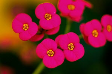 unique flowers captured in macro