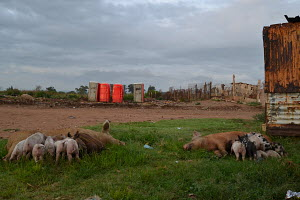 Phola park, Pig Farm, Portable public toilets, corrugated iron, grey skies