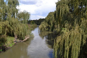 Daleside River, Willow Trees, Cloudy