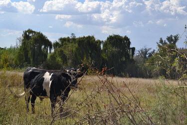 Daleside midday farm