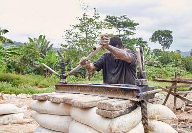 Pressing cassaba dough to remove water in order to make gari/ cassava grits