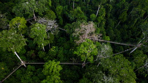 Aerial view of rainforest and canopy walk about 100ft off the ground at Kakum